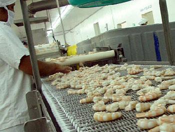 Production de crevettes au Honduras